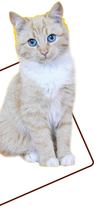 cat happy paw