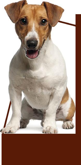 dog happy paw